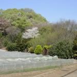 早春の崖線