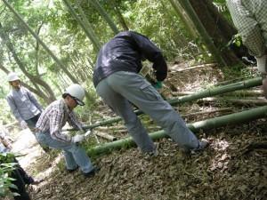 竹伐採作業体験s